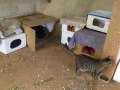 cat outer simple shelter (4)