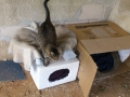 cat outer simple shelter (5)