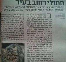 """מצב עיקור וסירוס חתולי רחוב בעיר פ""""ת"""