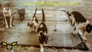 משבר הקורונה משפיע על חתולי הרחוב