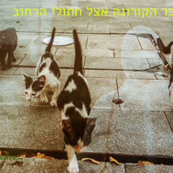 וירוס הקורונה משפיע על חתולי הרחוב